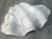 Natural Giant Clam Tridacna Gigas Shell 9.12lbs