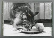 Cat 10 Gray Tabby And Mouse Sharing Dinner John Drysdale Art Blank Note Cards