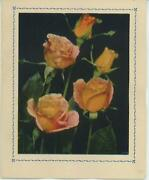 Vintage Pink Yellow Garden Flowers Roses Shabby Note Card Chic Garden Art Print