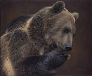 A Nose For Honey Daniel Smith Western Fine Art Giclee Canvas - Grizzly Bear