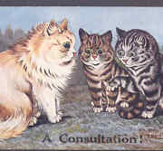 Wain.....cats Meet Fortune Teller For A Consultation Offers Paw Postcard