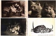 Cat, Cats, Chats 38 Vintage Postcards Mostly Pre-1950