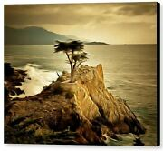 Lone Cypress Detail 2 By Barbara Snyder Seascape Abstract Canvas Giclee 16x20