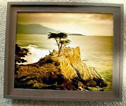 Lone Cypress Detail 2 By Barbara Snyder Framed Seascape Abstract Canvas 16x20