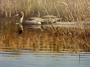 Gary Moss Reflections - Pintails