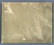 Panama Colon During The Rush On Wednesday 24 Sept 1902 Vintage Citrate Print.