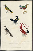 Antique Print-crested Long Tailed Pye-pie-grey-brazil-yellow Winged-martyn-1785
