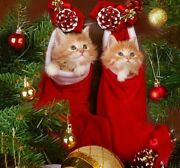Holiday Christmas Diamond Painting Cute Cats And Socks Ornaments Design Displays