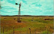 Texas Cattle At Watering Time Postcard Used 1951