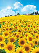 500 Piece Jigsaw Puzzle Hill Full Of Blooming Sunflower Landscapes 38 52 Cm
