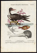Antique Print-frigate-chinese Fish-xcix-seligmann-leitner-edwards-1768