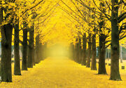 Jigsaw Puzzle 1000 Pieces Landscapes Yellow Ginkgo Tree Street 51 73.5 Cm