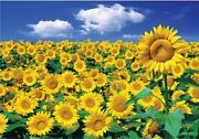 Landscapes Jigsaw Puzzle 1000 Pieces Sunflower Fields In Summer Sun Shining Day