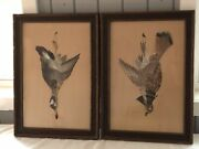 Antique Game Bird Duck Grouse Real Feathers Prints Pair