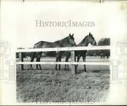1955 Press Photo Horses Arose And Filly In Kentucky Paddock - Nob45952