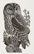 'wood Owl Original Wood Engraving C1937-39/2009 By Charles Tunnicliffe R.a.