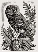 'little Owl Original Wood Engraving C1937-39/2009 By Charles Tunnicliffe R.a.