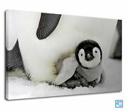 Emperor Penguin Protecting His Baby From Storm Canvas Print Wall Art Picture