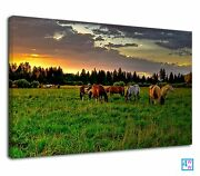 Herds Of Wild Horses In Grass Field During Sunset Canvas Wall Art Picture Print