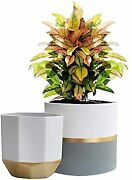 White Ceramic Flower Pot Garden Planters Indoor, Plant Containers With Gold And