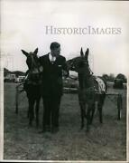 1955 Press Photo Governor Robert Meyner Of New Jersey And Prize Racing Mules