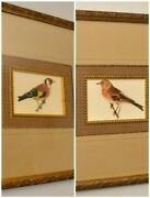 Pair Of Antique Magnus And Wilhelm Von Wright Ornithological Prints, Framed