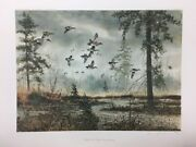 David Hagerbaumer Middle Fork Wigeon Teal Sprig Duck Teal Remarque Art Print