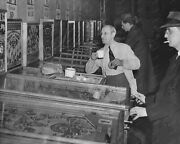Pinball Alley Row Of Woodrail Pinball Machines Vintage 8x10 Reprint Of Old Photo