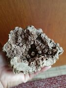 Rare Museum Quality Native American Indian Petrified Coral Bowl