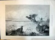 Old 1896 Grouse Drive Birds Hunting Sport Thorburn Author Anthony Hop Victorian