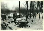 1989 Press Photo Eugene Grapa Burns Tree Stand In Chequamegon National Forest