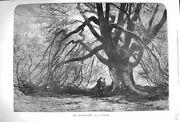 Original Old Antique Print 1875 Wagner Fine Art Trysting Tree Forest Scene 19th