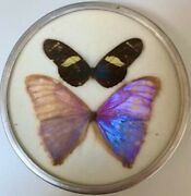 Vintage Butterfly Display. Mounted Butterflies Taxidermy Set In A Round Frame