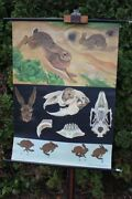 Role Map Schulwandkarte Wall Map Hare Wild Rabbit Animal Country School Map