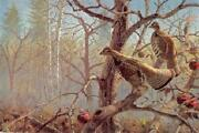 David Maass Abandoned Orchard Ruffed Grouse Artistand039s Proof On Paper