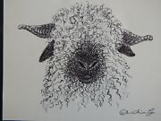 Original Black Pen And Ink Wash Drawing Of The Face Of A Valais Blacknose Sheep