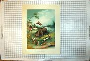 Antique Old Print African Rhinoceros Hunt Natives Guns Dogs Charging Pools