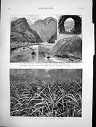 Antique Old Print Pine Apple Field Bahamas Canadian Pacific Railway Yale 1883