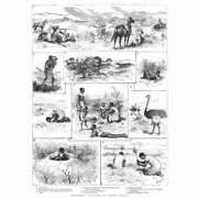 South Africa Scenes Of Springbok Hunting - Antique Print 1885