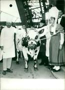 A Cow Has The Eiffel Tower - Vintage Photograph 4132856