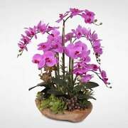 Real Touch 7-stems Phalaenopsis Silk Orchids With Succulents Purple/brown