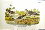 Old Greater Yellow-legs Semipalmated Sandpiper Spotted Birds Olour 18 19th