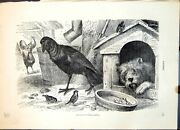 Old Print Raven Corax Nobilis Farmyard Setting Dog Poultry Sparrows C1874 19th