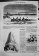 Antique Old Print English Tourists Boat Canal Fossil Carpentras Coal Wheat