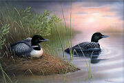New Expectations Loons 26x16 Canvas Print By Robert Metropulos