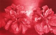 Gh Rothe Hibiscus Mezzotint On Paper Art 1981 Hand Signed Limited Edition