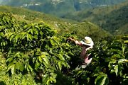 Up To 15 Lbs Colombian Santa Barbara Excelso E/p Coffee Beans 15/16 Whole/ground