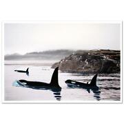Robert Wyland  Peaceful Orca Waters Make Offer