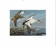 Maine 2 1985 State Duck Stamp Print Common Eiders Lighthouse By David Maass