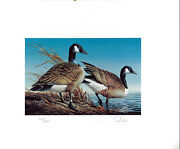 Minnesota 5 1981 State Duck Stamp Print Canada Geese By Terry Redlin